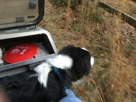finn-in-the-golf-cart