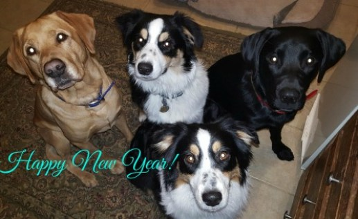 dogs-happy-new-year