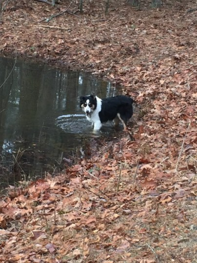finn-in-the-pond