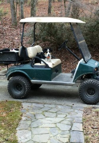 finn-on-the-golf-cart-refusing-to-come-in