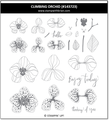 Climbing Orchid, Stampin' Up!, 143723