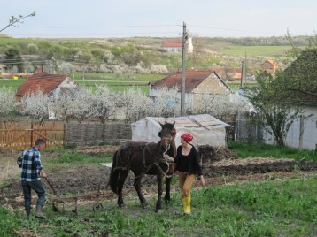 Teo, Mihai si Gelu (calul) / Teo, Mihai and Gelu (the horse)