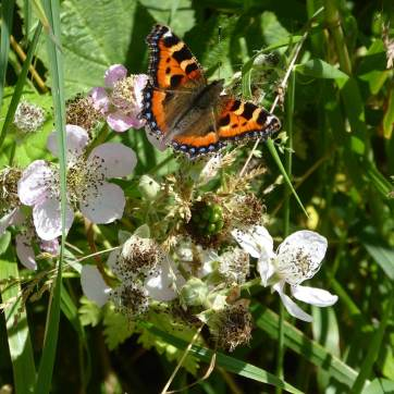 Stand - Campaigning to save the area north of Dorchester – Wildlife