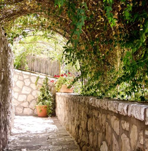 Miriam's established, vine-covered walk.