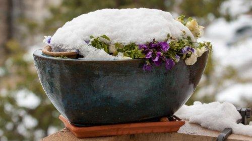 snow_13121474