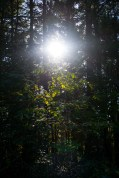forest-light-2