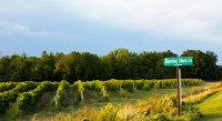 Photo of vineyards with road sign of Standing Stone Lane