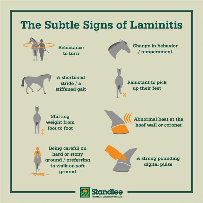 Symptoms. Causes and Feed Management for Laminitis