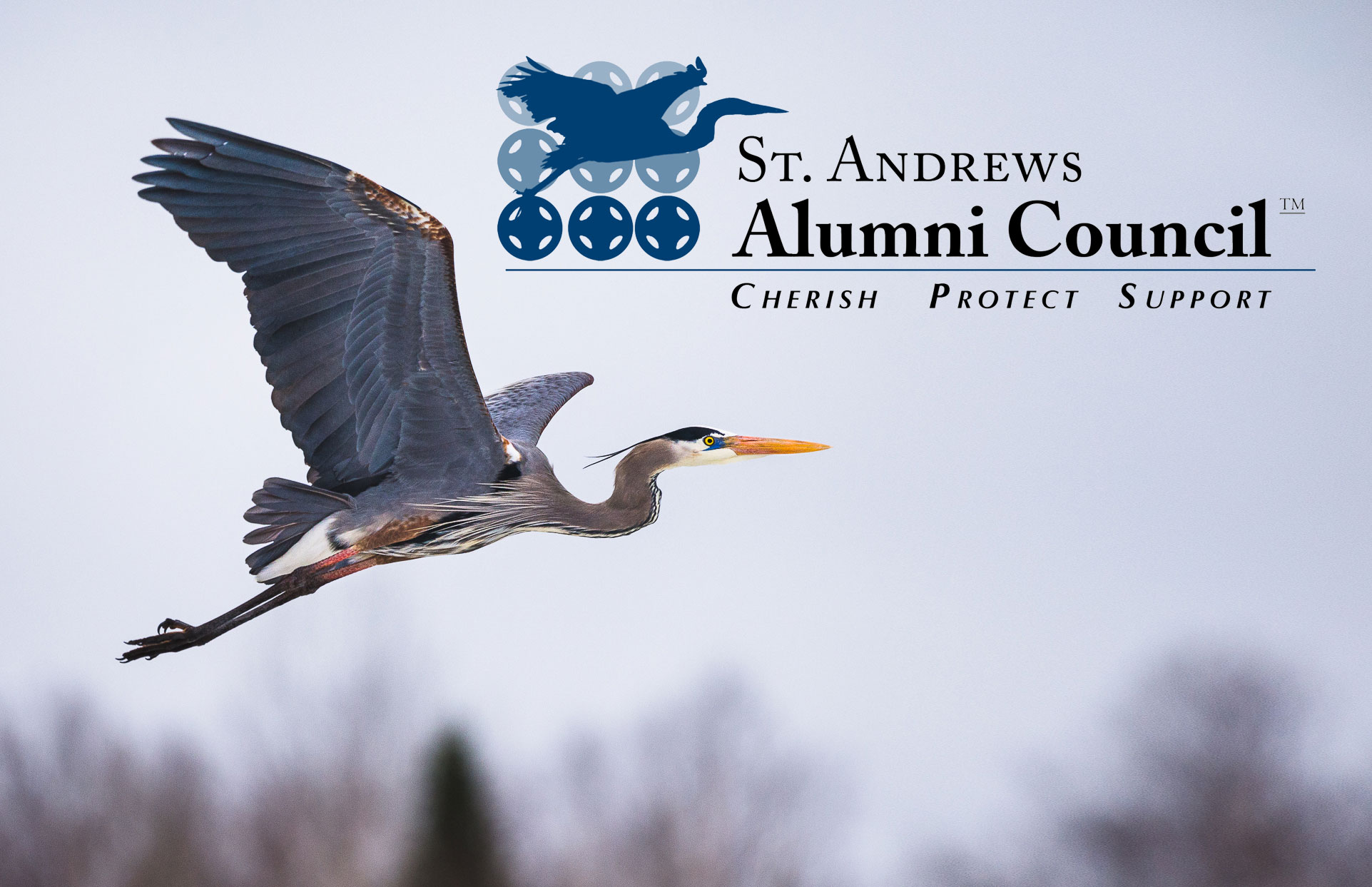 About the St. Andrews Alumni Council Logo