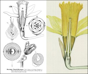 Reading the Collections, Week 5: Types Of Floral Mechanism
