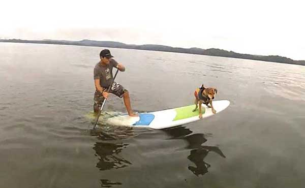 popping-a-wheely-with-a-dog-on-the-front-of-a-standup-paddleboard