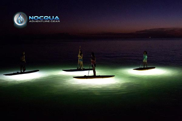 light up paddle in