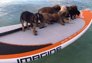 A girl who love sup puppies