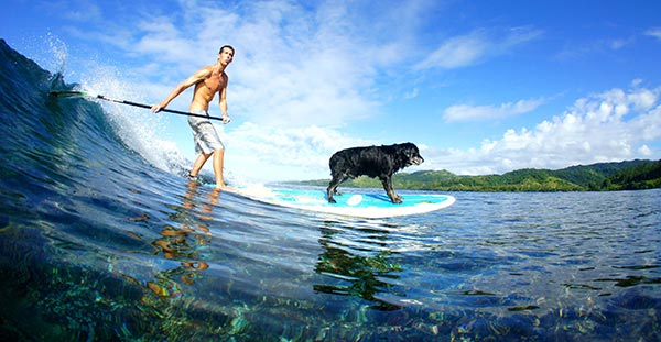 giving sup dog the dream ride