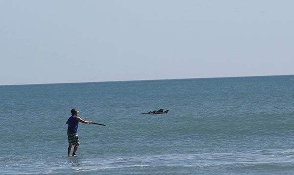 dan gavere paddling with dolphins