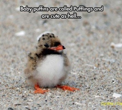 cool-baby-bird-fluffy-feathers