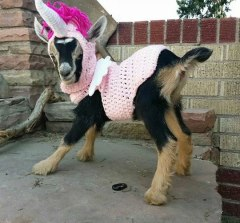 cool-goat-unicorn-knitted-suit