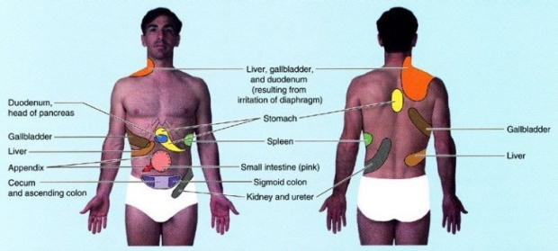liver panel diagram rover 75 wiring and body electrical system referred pain physical exam | stanford medicine 25