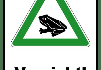 Die Kröten sind wieder unterwegs