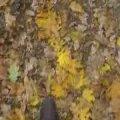 осень в Станьково