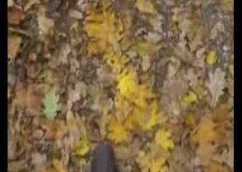 Станьково: осень.