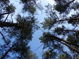 И небо над Станьково другое... Лето 2011. Фото Ильи Бражникова