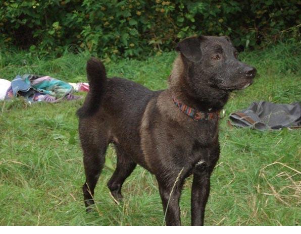 В районе Станьковского леса потерялся пес Боб, черный, с проседью, на шее черный кожаный ошейник. Нашедшему вознаграждение.