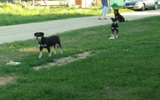 СРОЧНО: щенки ищут дом!