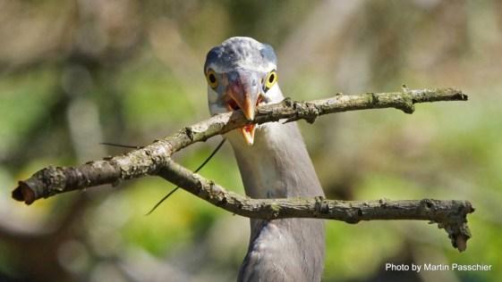Heron Martin Passchier2