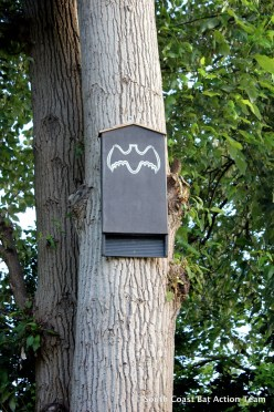 tree bat box