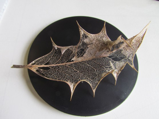 answer - leaf veins of English holly