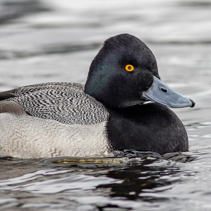 Everything you wanted to know about the birds of Stanley Park