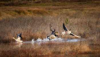 the thrill of the chase – Stan Schaap PHOTOGRAPHY
