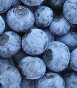 Organic Sussex Blueberries