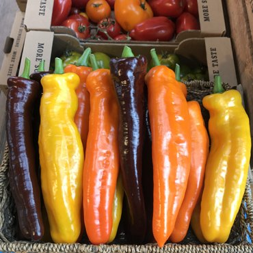 romano_peppers_crop