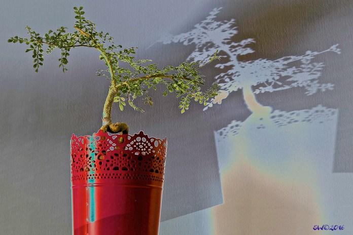 Polarized plant