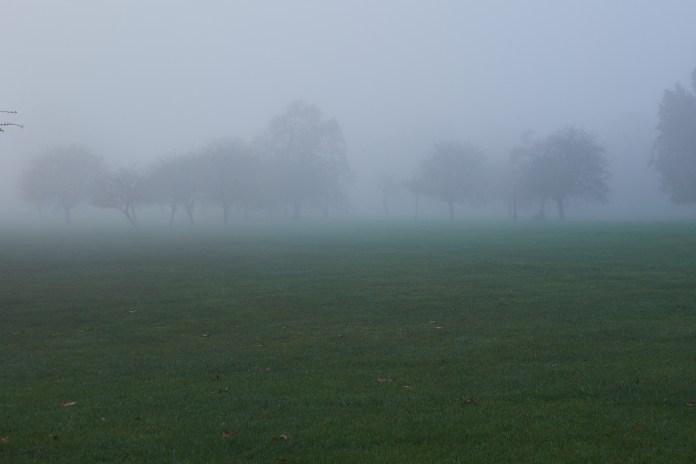 Primrose trees fog.jpg