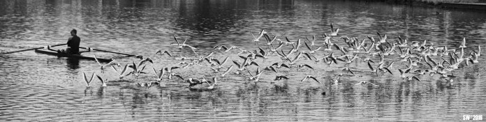 Gulls in fright (conflict of interests).jpg