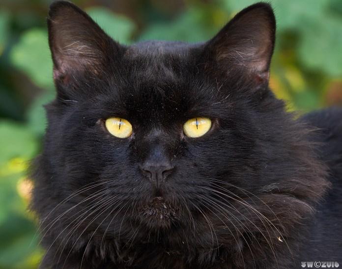 Cats' eyes.jpg