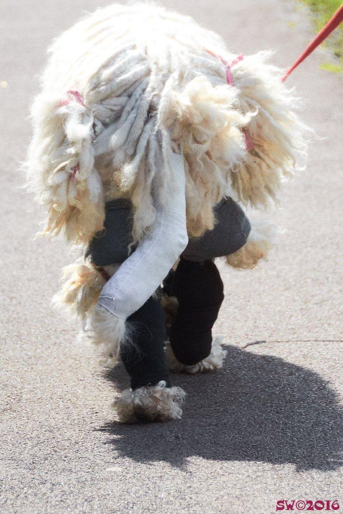 dog-tails-2