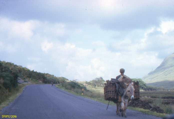 turf-transportation