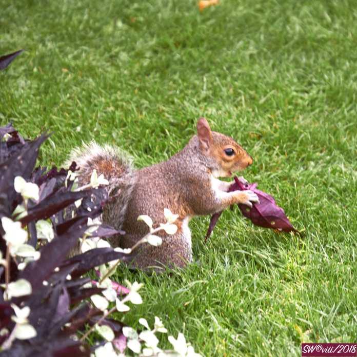 DSCF2899Squirrel feeding
