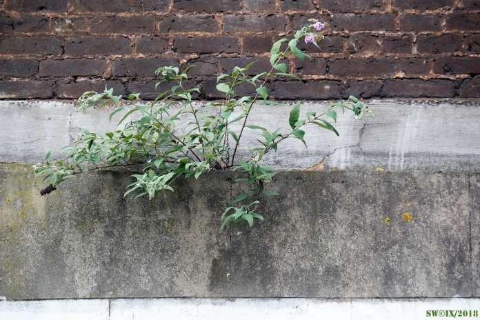 DSCF3102 Wall plants