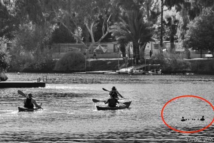 Ducks & rowers
