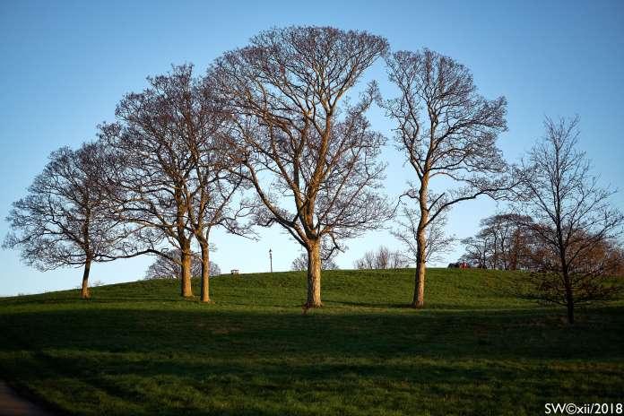 5 Trees, Primrose