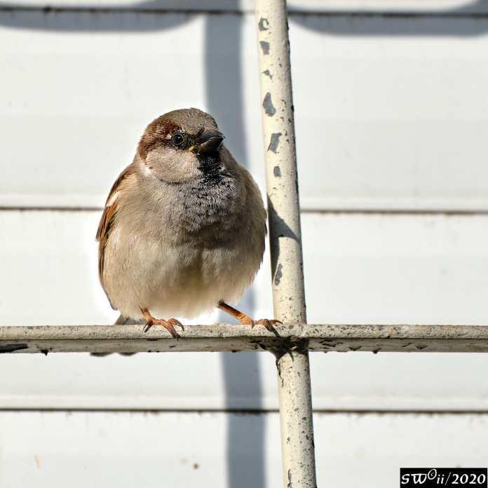 Sing little birdie
