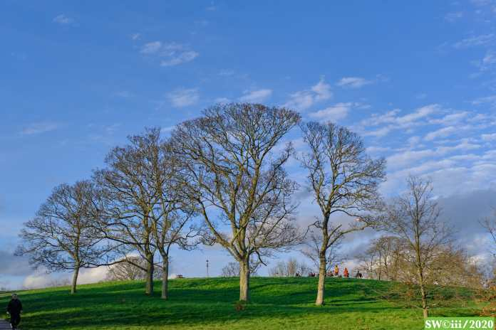 Trees, Primrose Hill, afternoon