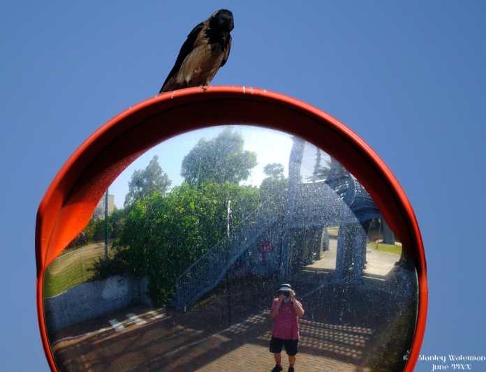 Photo & crow