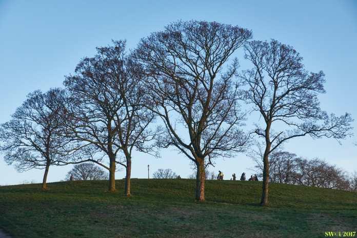 Trees i.2017