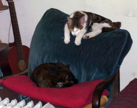 Dariusz and Farbexplosion lying on a chair